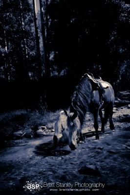 brett-stanley-photography-20090323-_mg_8317